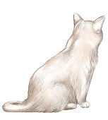Brown cat sits back and observes isolated on white background. Watercolor and lead pencil graphic hand drawn illustration