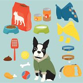 Some cute stuff for a puppy of Boston Terrier