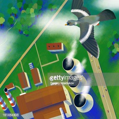Pigeon in flight : Stock Illustration