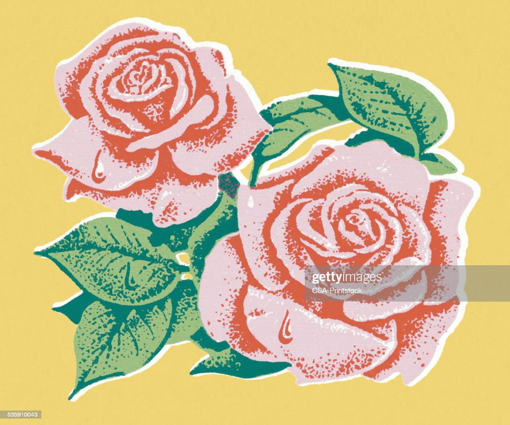 Rosas cor de rosa : Ilustração de stock