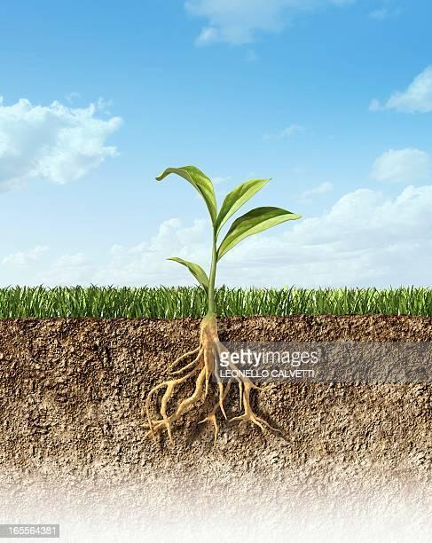Plant, artwork
