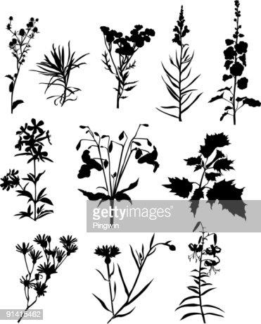 Formal Herb Garden Design Italian Garden Design Home Plan And