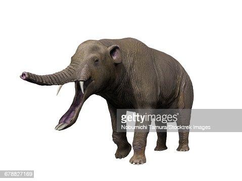 proboscidea stegotetrabelodon primitive elephant side profile stock