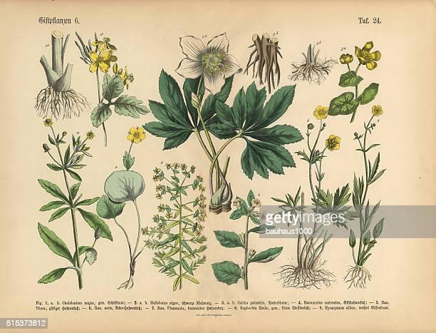 Matière nocive et toxiques les plantes botaniques victorien Illustration