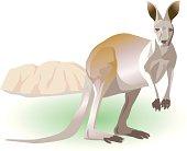 Portrait of kangaroo, side view