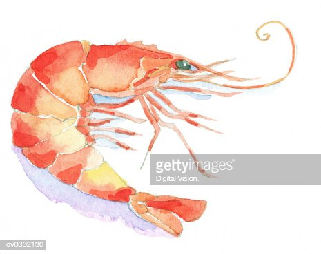 Prawn : Stock-Illustration