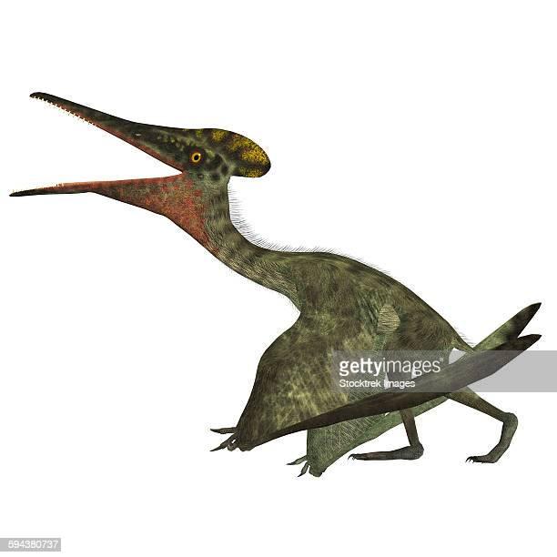 Pterodactylus flying reptile.