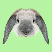 Illustrated portrait of blue point Rabbit on green background.
