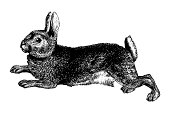 """Old engraving of a rabbit, isolated on white. Scanned at 600 DPI with very high resolution. Published in Systematischer Bilder-Atlas zum Conversations-Lexikon, Ikonographische Encyklopaedie der Wisse"