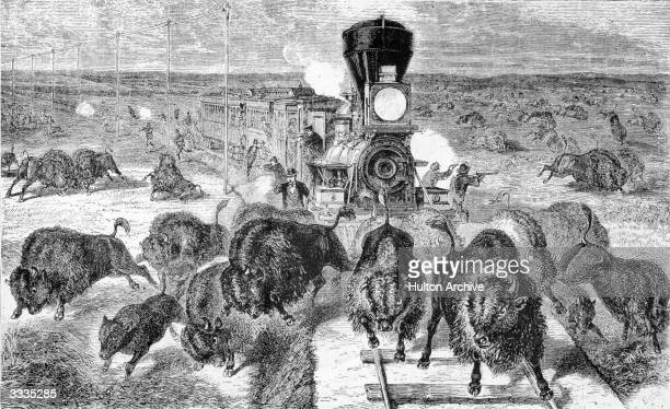 Railroad travellers shooting buffalo from a train on the KansasPacific Railroad between Ellis and Kit Carson It became a custom in the not to...