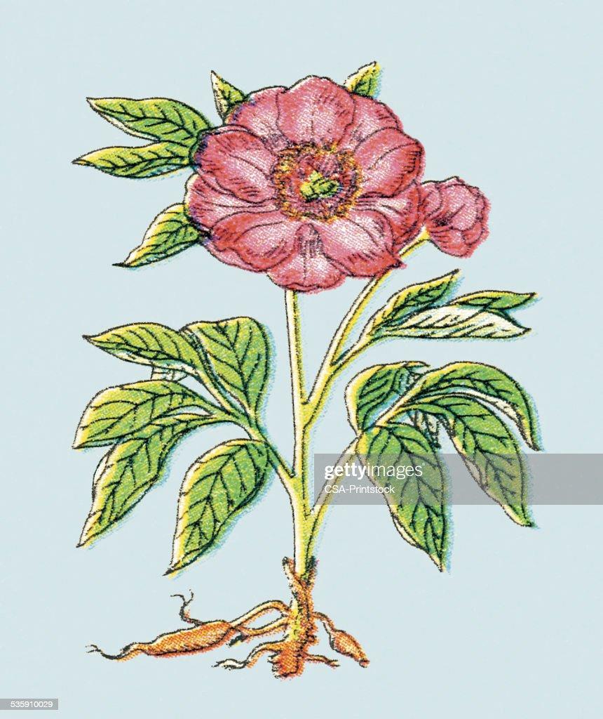 Flor vermelha : Ilustração de stock