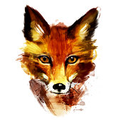 Watercolor Wild Animal Red Fox.Hand Drawn Portrait