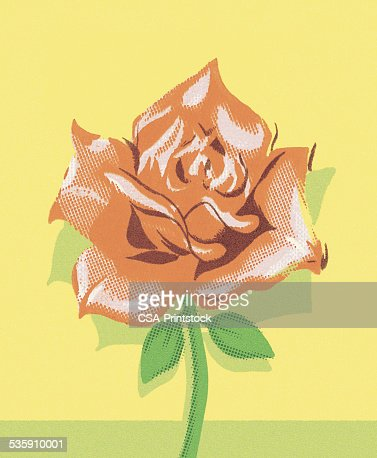 Red Rose : Stock Illustration