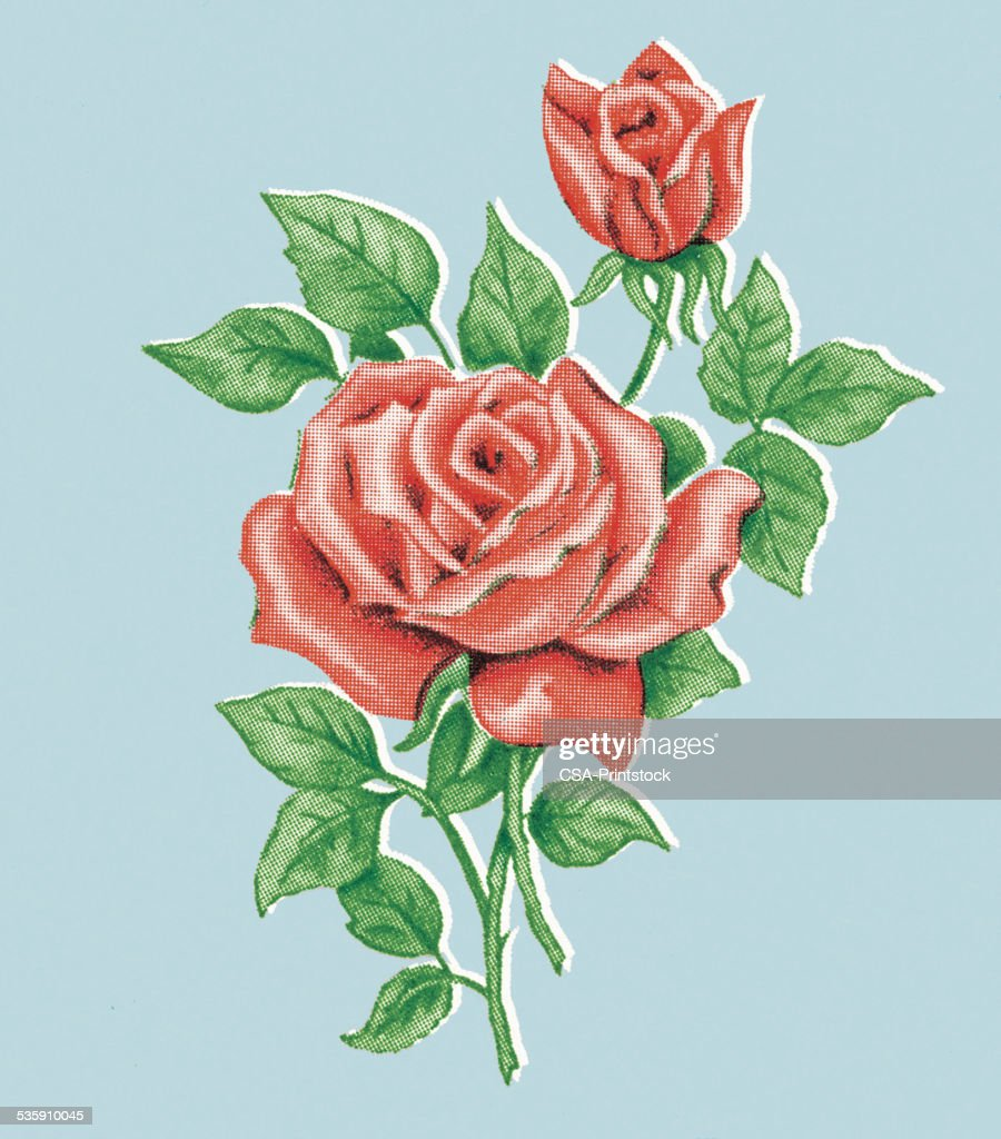 Rote Rosen : Stock-Illustration