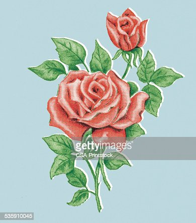 Rose rosse : Illustrazione stock