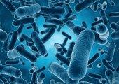 3D rendering Bacteria closeup.