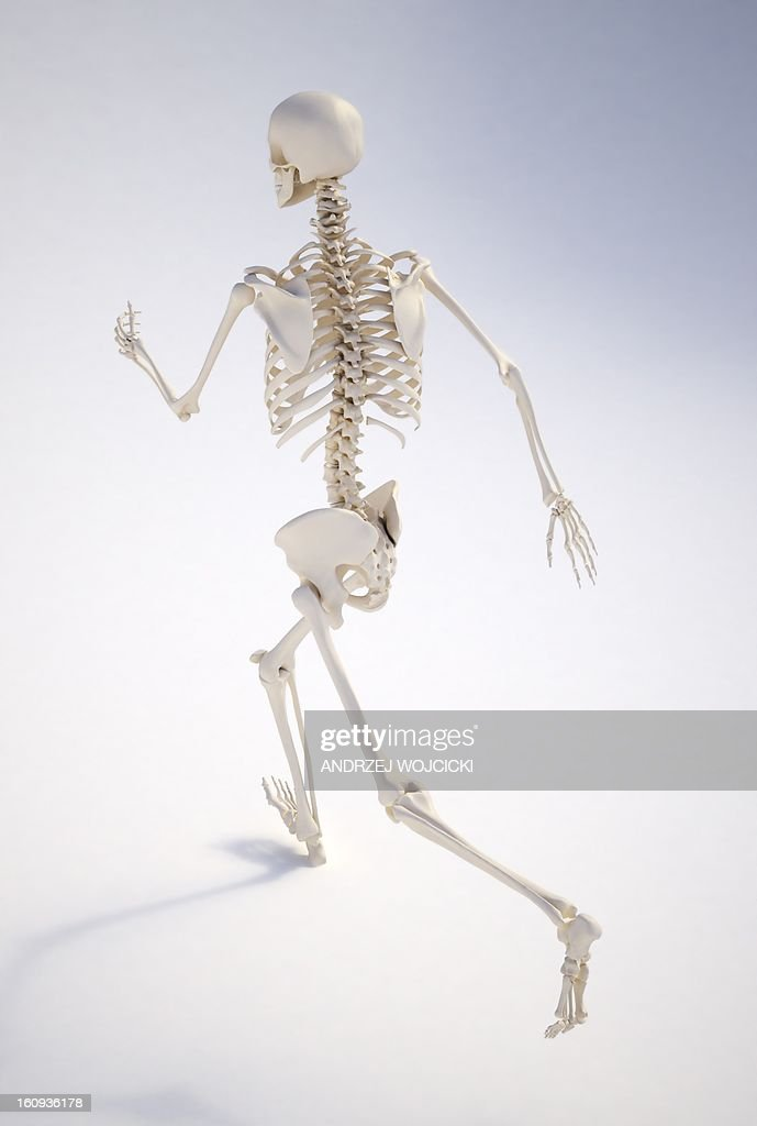 Running skeleton, artwork : Stock Illustration