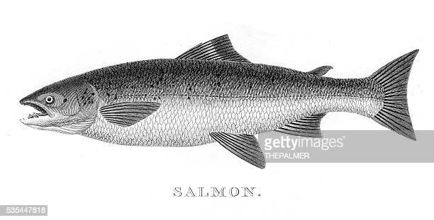 Salmon engraving 1812