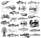 """Misx of seafood illsutrations - many kinds of sea fish (tuna, salmon, bass, anchovy, mackerel etc), lobster, prawns, clums, crab, octopus. Illustrations published in Systematischer Bilder-Atlas zum C"