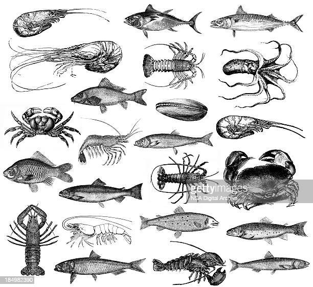 Illustrations de fruits de mer, de poisson, homard, crevettes, des palourdes, du crabe, du poulpe