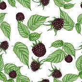 Seamless pattern of hand drawn blackberries