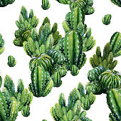 Cactus illustration can be used as print, home or garden decoration, wrapping paper, textile or wallpaper.