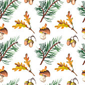 Seamless pattern with pine branches, mushrooms, acorns and oak leaves. Forest illustration. Watercolor on white background.
