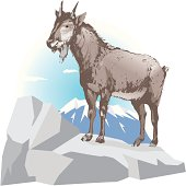Serow standing on the rock, side view