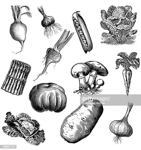 Set of 12 Vegetables