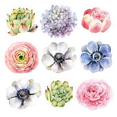 Big set of different flowers isolated on white background. Watercolor illustration