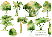 Set of hand drawn watercolor trees.Hand painting watercolor.Collection of 10 isolated watercolor trees on white background.Set of different trees:cedar,oak,palm,baobab,cypress,tropical trees and more.