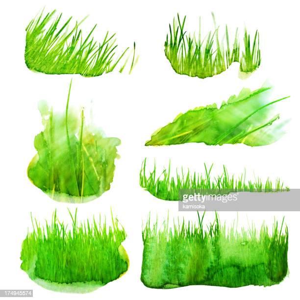 Set of watercolor grass illustration