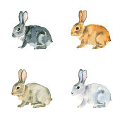 Watercolor painting. Black, red, white and brown rabbits on white background.
