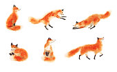 Sitting fox, sleeping fox, playing fox, jumping fox, going foxy. Hand drawn illustration.