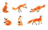 Sitting fox, sleeping fox, playing fox, jumping fox, going foxy. Hand drawn illustration.