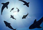 Sharks circling boat, underwater view