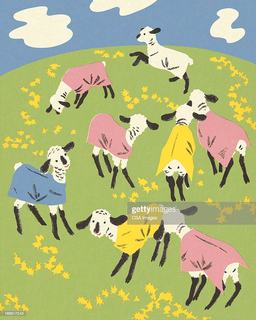 Sheep in a Pasture : Stock Illustration