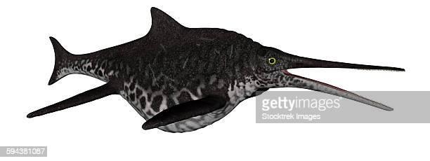 Shonisaurus marine reptile fish isolated on white background.