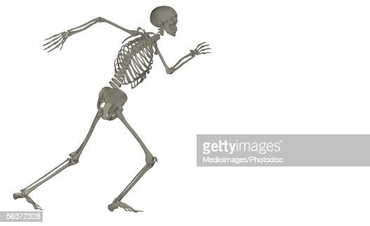 side profile of a human skeleton sitting on a box stock, Skeleton