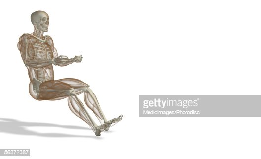 side profile of a human skeleton stock illustration | getty images, Skeleton