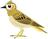Illustration of a lark's profile