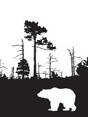 silhouette bear on background wild wood