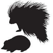 silhouette of the hedgehog and porcupine on white background