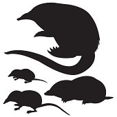 silhouette of the mole, mouse and desmans on white background