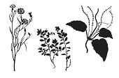 silhouettes of the timber plants on white background