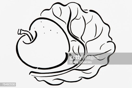 Simple Black And White Line Art : Simple black and white line drawing of apple lettuce