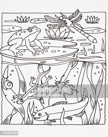 Simple Line Drawing Of Pond Life Stock Illustration