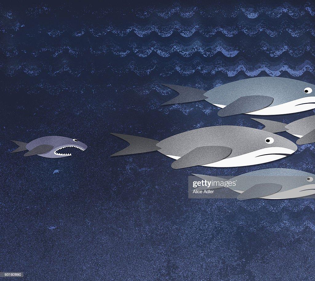 A small fish chasing three sharks : Stock Illustration