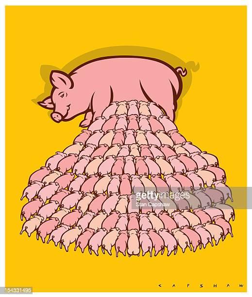 Sow nursing hundreds of piglets