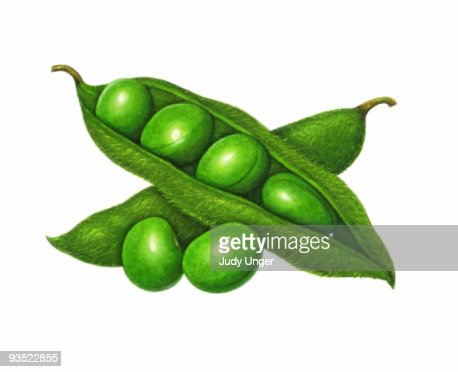 Soybean Pod Stockillustraties | Getty Images